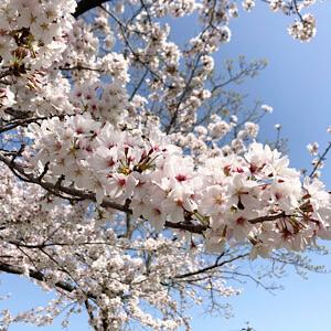 春!新しいことを始めたくなる季節・・・🌸